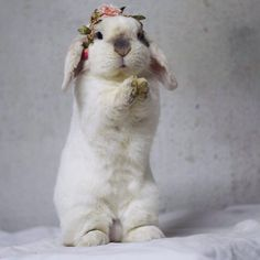 See this Instagram photo by @exempelthebunny • 7,765 likes
