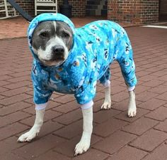 My own design for a pattern for Doggie pajamas in a digital format. Perfect for larger dogs, pitbulls and dogs with a chest measurement of