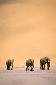Trio of Elephants. BelAfrique your personal travel planner - www.BelAfrique.com