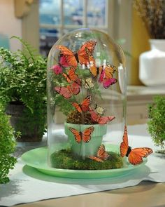 Upcycle Jars and Vases into these stunning Butterfly Terrariums. We have filled our post with gorgeous inspiration that you will love. We've included a video tutorial for you too. You will not want to miss these super cute ideas and it's easy as!