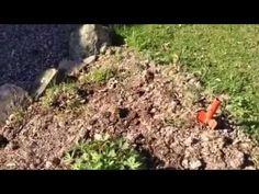 Grenseliv: Se video fra hagen og utestua (+ spilleliste) Gardening, Plants, Garten, Flora, Plant, Lawn And Garden, Planting, Horticulture