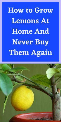 Healthy Fruits, Healthy Drinks, Healthy Food, Gardening For Beginners, Gardening Tips, Diy Garden Projects, Garden Ideas, How To Grow Lemon, Heart Gif