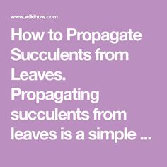 How to Propagate Succulents from Leaves. Propagating succulents from leaves is a simple project that requires a few steps and a couple supplies. After cutting off a healthy leaf, the leaf will naturally sprout new roots, and a new plant...