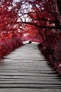 This looks so pretty and a walk through the tree..