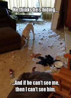 Aww, poor naughty pup! :D