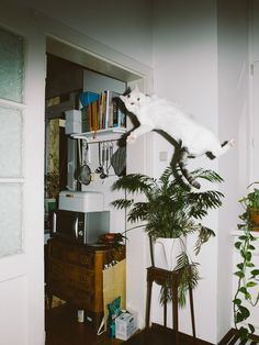 les photos de chats qui volent de Daniel Gebhart de Koekkoek / Flying Cat