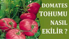 Plant Breeding, Diet And Nutrition, Gardening, Botanical Gardens, Beautiful Gardens, Farmer, Youtube, How To Plan, Vegetables
