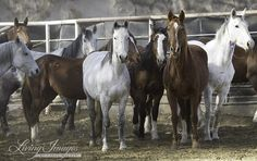 by Carol Walker, Director of Field Documentation for Wild Horse Freedom Federation, as published on Wild Hoofbeats After the proposal to experiment on sterilizing wild mares at the Burns BLM Facili...