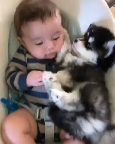 Things that make you go AWW! Like puppies, bunnies, babies, and so on. A place for really cute pictures and videos! Cute Funny Animals, Cute Baby Animals, Funny Cute, Funny Dogs, Animals And Pets, Cute Animal Videos, Funny Animal Pictures, Cute Pictures, Cute Kids