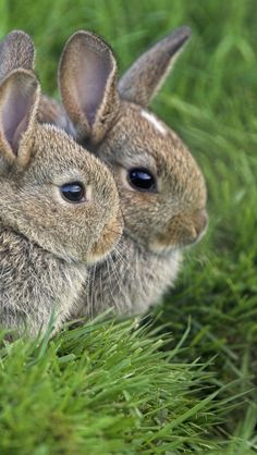 This is actually a three-headed bunny. You can see the ears and some forehead from the third head in the back.