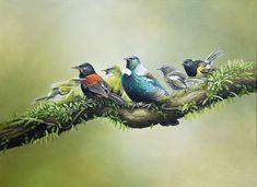 Craig Platt NZ wildlife artist, New Zealand birds artist, Auckland illustrator, … – Kiwi Bird Bloğ Bird Drawings, Cartoon Drawings, Bird Artists, New Zealand Art, Nz Art, Bird Illustration, Wildlife Art, Beautiful Birds, Pet Birds