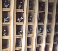Pigeon Loft Design and Loft Plan Pigeon Nest, Pigeon Cage, Le Pigeon, Jacobin Pigeon, Pigeon Loft Design, Racing Pigeon Lofts, Dog Station, Pigeon House, Gardens