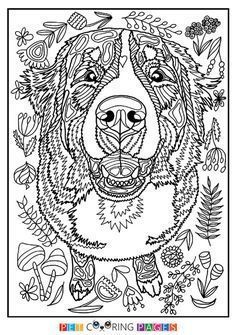 Newest Pic Bernese Mountain Dogs Colors Style Being A Working Breed The Bernese Newest Pic Bernese Mount Dog Coloring Book Dog Coloring Page Dog Drawing