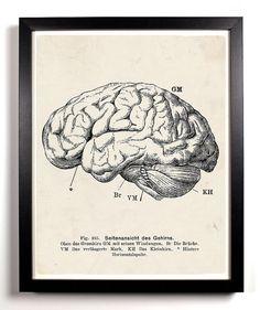 Human Brain Anatomy Home Kitchen Nursery Bath Dorm