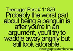 Poor penguins can never be angry