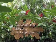 Monteverde, New Day, Costa Rica, Plants, Brand New Day, Plant, Planets