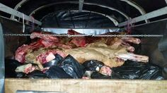 Noticias de Cúcuta: Incautadas más de dos toneladas de carne insalubre...