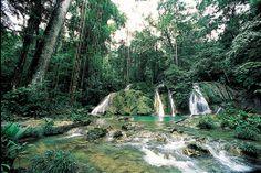 Bioma: Selva y Bosque Tropical lluvioso. Lugar al que corresponde: America del Sur. Problemas ambientales: Extincion de animales.
