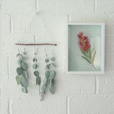 Make your own wall art from native flora Eucalyptus Leaves, Small Leaf, Printed Linen, Nativity, Flora, Candle Holders, Gallery Wall, Bedroom Decor, Wall Art