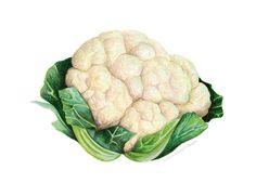Cauliflower Painting // Food Illustration // от KendyllHillegas
