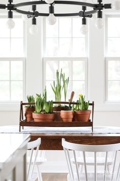 Learn how to make a spring centerpiece using potted flowering bulbs. Enjoyed it through the season, then plant the bulbs to enjoy again next year. Thanksgiving Table Settings, Holiday Tables, Christmas Tables, Bulb Flowers, Flower Pots, Large Pots, Wood Tray, Fall Table, Terracotta Pots