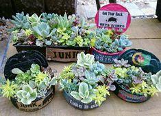 『オリジナルのリメ缶に寄せ植え♬』Haruminさんが投稿したリメ缶,自慢の多肉植物コンテスト,アレンジ,多肉植物,小さな庭の画像です。 (2015月7月14日) Succulents, Plants, Succulent Plants, Plant, Planting, Planets