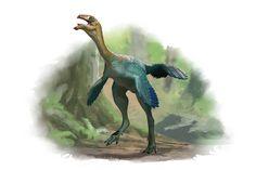 Draw Dinovember Day 11 Caudipteryx