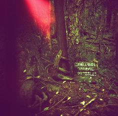 Aokigahara: the 'suicide' forest japan