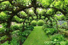 Ogród w budowie - nieustającej - strona 664 - Forum ogrodnicze - Ogrodowisko
