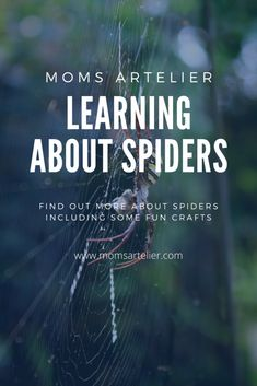 Learn about Spiders - Insect Crafts, Life Cycles, Pick One, Follow Me On Instagram, Some Fun, Prompts, Fun Facts, All About Time, Homeschool
