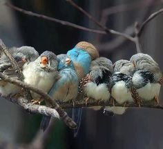 Funny pictures about Cuddling birds. Oh, and cool pics about Cuddling birds. Also, Cuddling birds photos. Cute Birds, Pretty Birds, Beautiful Birds, Animals Beautiful, Funny Birds, Beautiful Life, Beautiful Moments, Tier Fotos, Little Birds