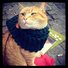 The street cat called bob in his new scarf made by me :) by fairyknitsmagic, via Flickr