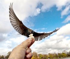 Russian photographer Alex Royal caught these by feeding birds with one hand while snapping photos with the other.