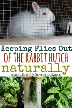 Flies pose an icky and sometimes deadly problem for our bunnies. Keeping flies out of the rabbit hutch isn't hard and if we are diligent we can improve our rabbit's chances of avoiding fly strike. Flies pose an icky and sometimes dead Rabbit Pen, Rabbit Farm, Rabbit Toys, House Rabbit, Silly Rabbit, Rabbit Cages Outdoor, Outdoor Rabbit Hutch, Rabbit Hutch Plans, Rabbit Hutches