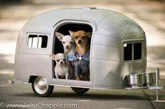 Chihuahua camper