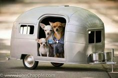 Chihuahua Camper. We need this for Frito, Penelope and Zoe