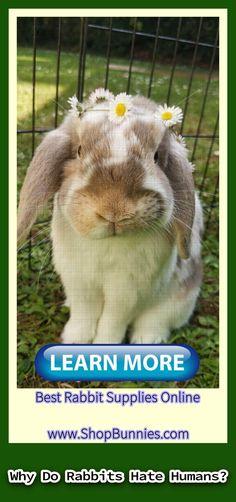 rabbit names    rabbit food    flemish giant rabbit    lionhead rabbit    rabbit ideas    angora rabbit    jack rabbit    wild rabbit    rabbit craft Wild Rabbit, Jack Rabbit, Rabbit Eating, Rabbit Food, Lionhead Rabbit, Angora Rabbit, Rabbit Facts, Flemish Giant Rabbit, Rabbit Breeds