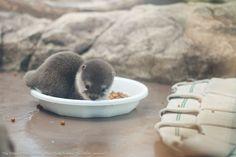 Let's be honest, otters make the world infinitely cuter.