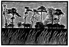 Scots Pines.....James Dodds