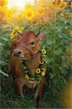 Baby Pictures With Cows Cattle 24 Ideas Cute Baby Animals, Farm Animals, Animals And Pets, Funny Animals, Cow Pictures, Animal Pictures, Beautiful Creatures, Animals Beautiful, Beautiful Beautiful