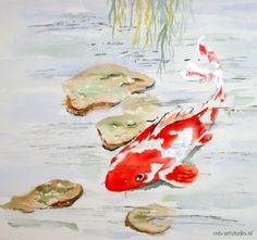 Koika fish