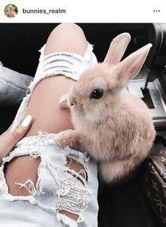 Das Kaninchen kann mit einem selbstaufopferndem Bein nix anfangen…aber auch sc… The rabbit can not do anything with a self-sacrificing leg … but also garnix ! Cute Little Animals, Cute Funny Animals, Cute Animals Kissing, Cute Baby Bunnies, Hunny Bunny, Tier Fotos, Cute Creatures, Cute Animal Pictures, Funny Pictures