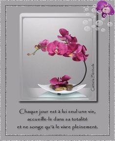belles images zen - Page 6 Morning Greetings Quotes, Bon Weekend, Positive Attitude, Positive Affirmations, Happy Mothers Day, Craft Projects, Lily, Positivity, Messages