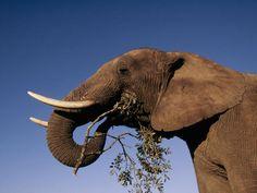 Οι αφρικανικοί ελέφαντες και οι ρινόκεροι της Νότιας Αφρικής