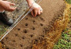 Virgin Soil | Straw Bale Garden Tips
