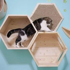 Hexagon cat climbers cat, pet lovers quotes, cat easy - Cat playground outdor - How to create a perfect outdoor play area Mimi Chat, Cat Climber, Cat Perch, Cat Playground, Outdoor Playground, Cat Shelves, Pet Furniture, Furniture Outlet, Cheap Furniture