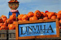 Linvilla Orchards!
