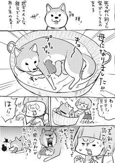 松本ひで吉*犬と猫とねこ色単行本6/13発売 (@hidekiccan) さんの漫画   102作目   ツイコミ(仮)