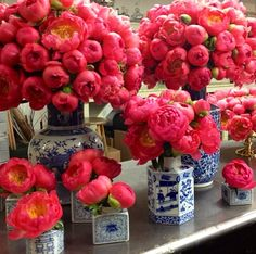 peonies in blue and white vases