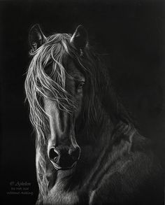 Friesian - Cathy Skeeter - Aphelion Artwork